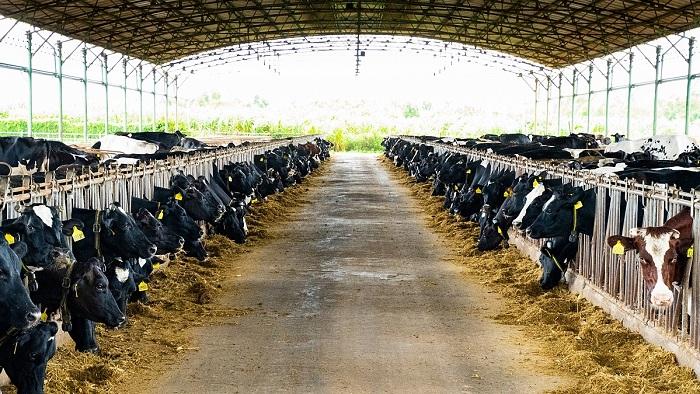 Việc chống nóng cho trang trại chăn nuôi có quan trọng không?