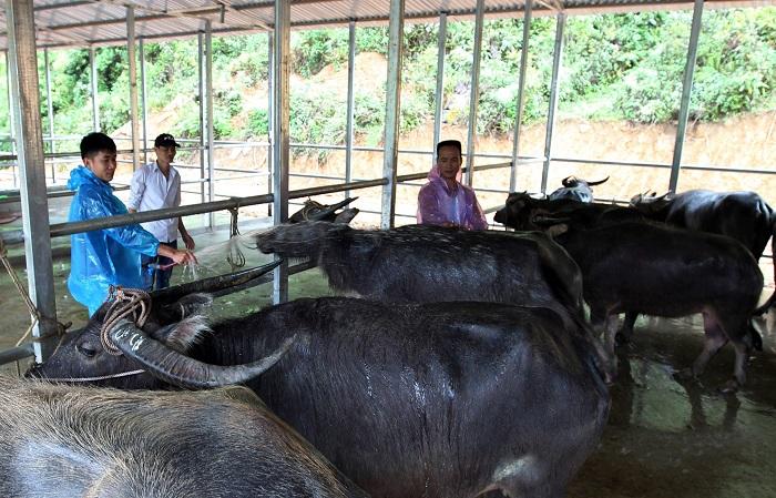 Có cần phải chống nóng cho trang trại chăn nuôi hay không