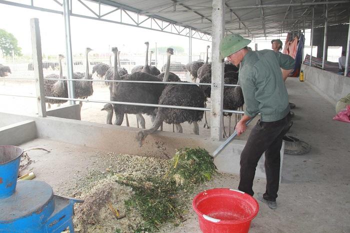 Giải pháp hiệu quả khi chống nóng cho trang trại chăn nuôi!